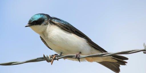 Breaking Into Birdwatching Presentation with Teresa & Miles Tuffli