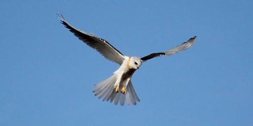 Beginners Birding Walk at the Laguna de Santa Rosa - Guided Walk with Teresa & Miles Tuffli