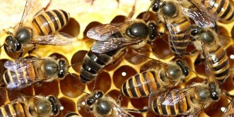 1st Orchard Bee Garden Workshop Event by Nutrinest tickets