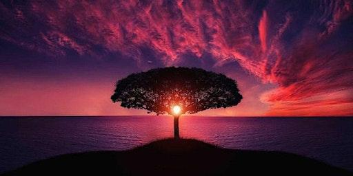 Let's Meditate!