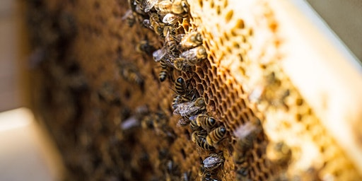 Atelier Bee to Bee : Découverte