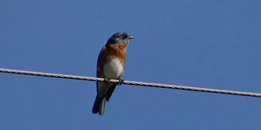 Lockhart State Park Homeschool Class: Birds