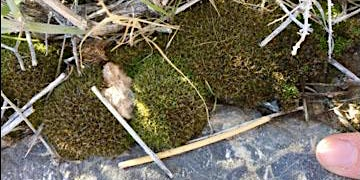 Mosses in Motion: Desert Moss Ecology and Diversity (Biol X425.1) 1 unit)