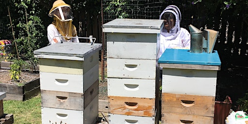 Introduction to Backyard Beekeeping