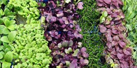 Year-Round Indoor Salad Class - Afternoon Session - January 4 tickets