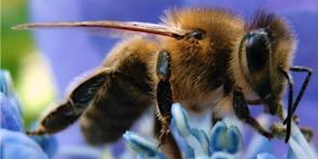 Year Round Varroa Mite & Virus Management:  Keeping Your Hive Healthy tickets