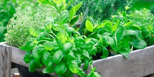 Veggies and Herbs 101