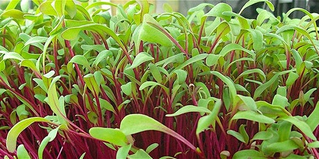 Grow Your Own Microgreens! tickets