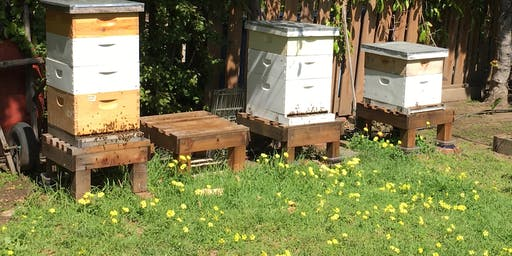 Sunday 3-Part Series: How to Split Your Beehive