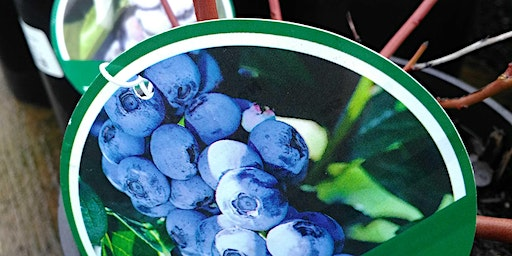 Blueberry Pruning with Tonia Lordy of the Home Orchard Society