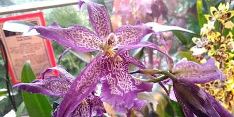 Orchids 101 with Sue Volek tickets