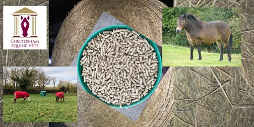 The Nuts and Bolts of Equine Nutrition