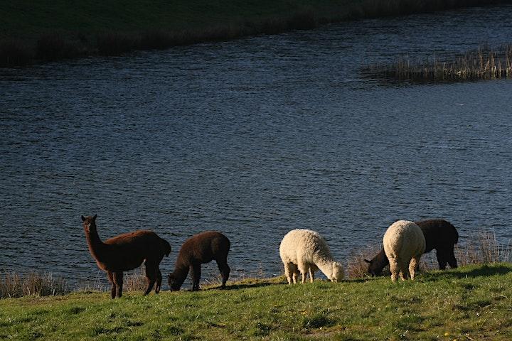 Alpaca Experience - Farm Open Day image