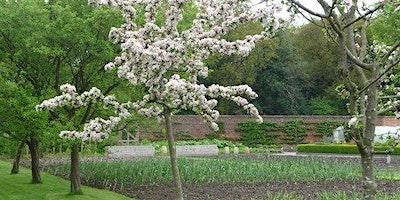 Design an Orchard