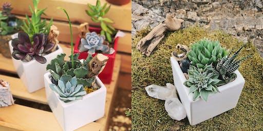 Honey Plant Succulent Arranging Workshop