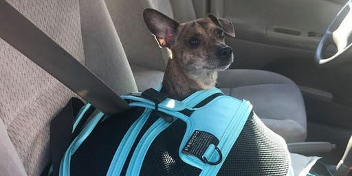 Pop Up Dog Seatbelt Clinic