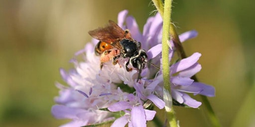 Bee a Citizen Scientist - Insects Discovery Tour