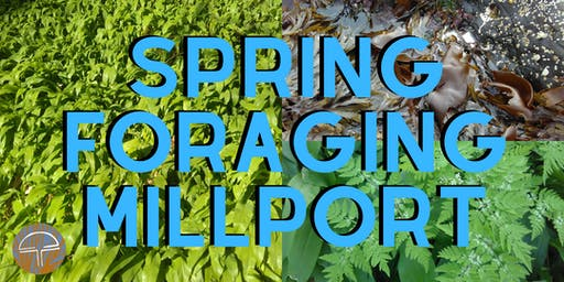 Millport - Forage and Wild Cook Out!