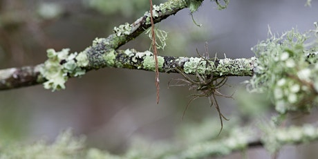 ONLINE WEBINAR: What's Not to Lichen? tickets