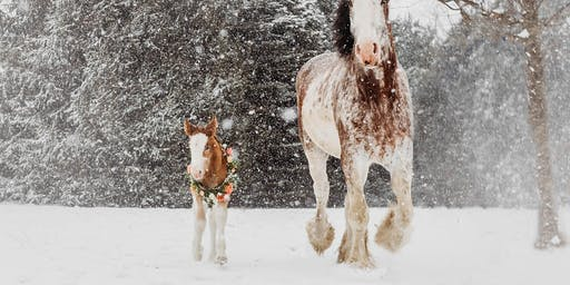 Christmas with the Clydesdales