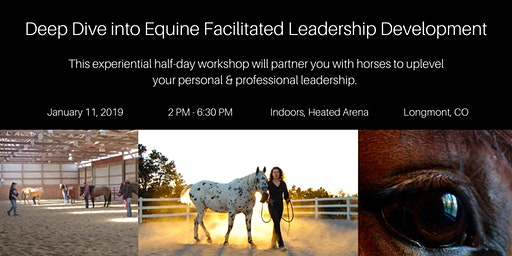 Half Day Immersive Workshop: Partner With Horses- Transform Your Leadership