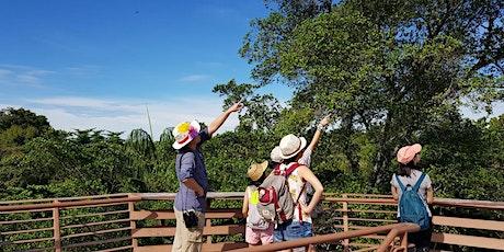 15 Dec (Sun) - Free guided walk at Chek Jawa Boardwalk tickets