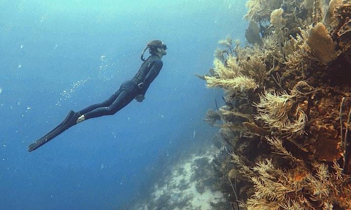 Beginner Freediver Course image