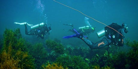 Learn to dive! - PADI Open Water Diver Course tickets