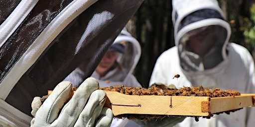 February 16th, 2020 - Introduction to Beekeeping at Vue Jindivick Eco B&B