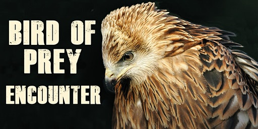 Bird of Prey Encounter