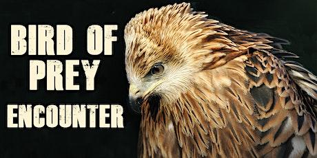Bird of Prey Encounter tickets