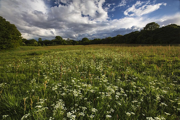 Photography Workshops on Hampstead Heath image