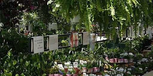 Houseplant Fest - Bloomingdale