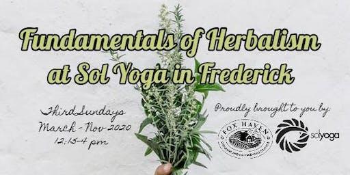 Fundamentals of Herbalism Series at Sol Yoga