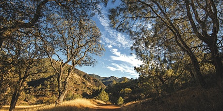 Mitchell Canyon Tarantula Hike tickets