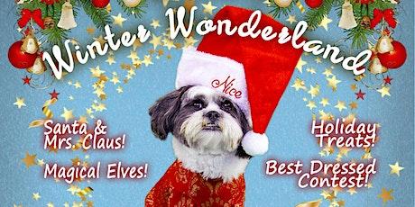 Great Steve's Winter Wonderland! tickets