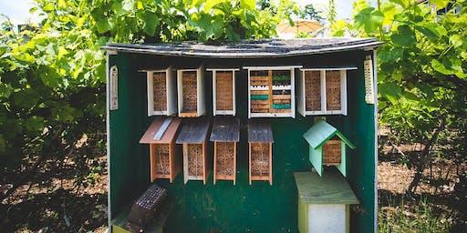 Pollinators of Southern Vancouver island
