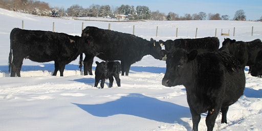 2020 Maryland Grazers Network Regional Grazing Conference