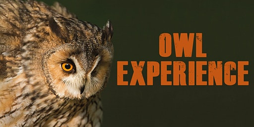Owl Experience