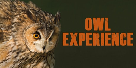 Owl Experience tickets