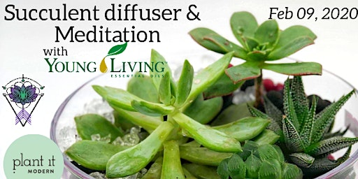 Succulent Diffuser and Meditation