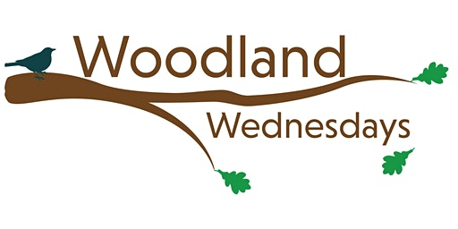 Woodland Wednesdays (Geauga):  Increase Your Wealth and Woodland Health