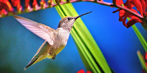 Free Seminar: Attracting Birds to Your Yard