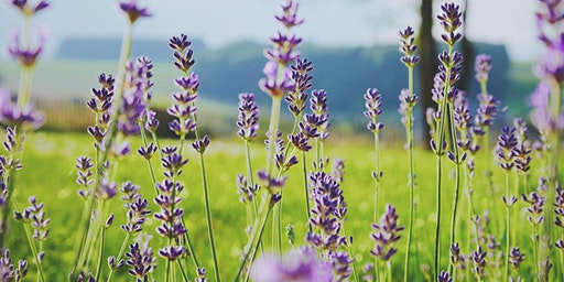 Free Seminar: Heaven Scent - Best Plants for a Fragrant Garden