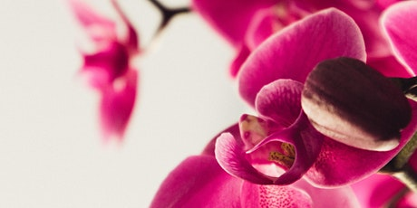Free Seminar: Orchids 101 tickets