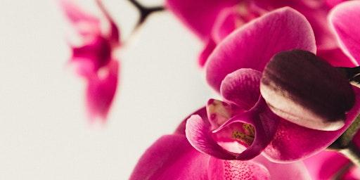 Free Seminar: Orchids 101
