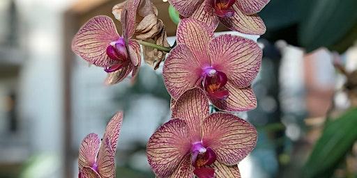 Free Seminar: Tried & True Orchid Tips
