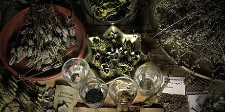 Plant Magic & Medicine Intensive tickets