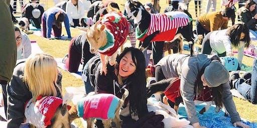 Holiday Goat Yoga in Addison Circle!