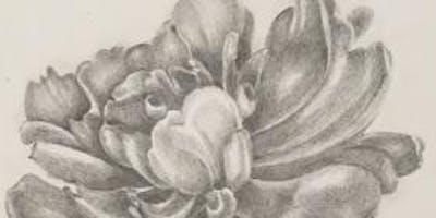 Winter Botanical Drawing (six classes)